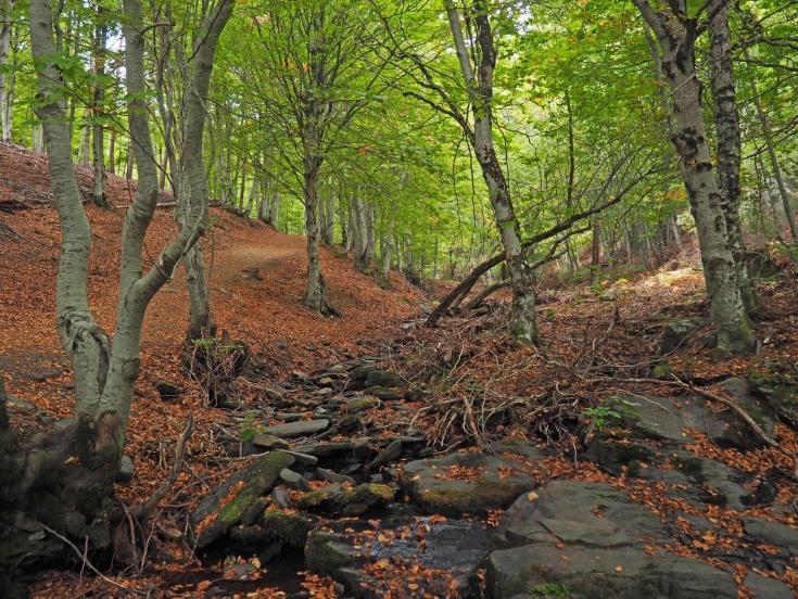 Paisaje del mes de octubre en la senda de carretas. Suelo cubierto con las primeras hojas secas y árboles que comienzan a amarillear.