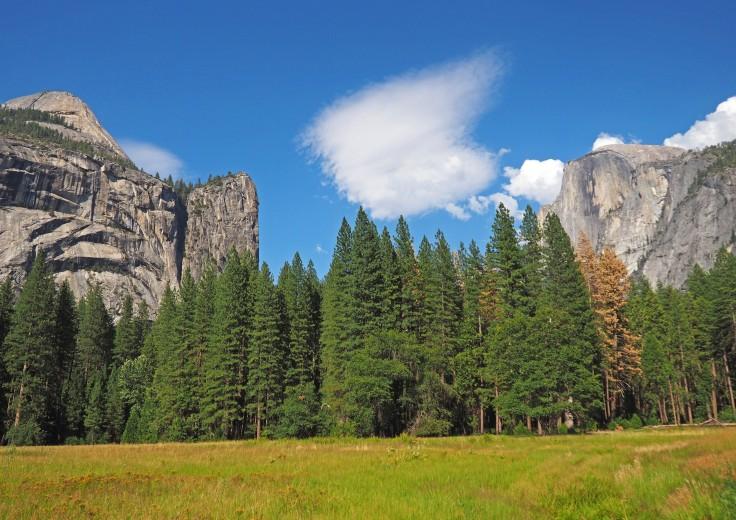 Vistas del Half Dome en Yosemite