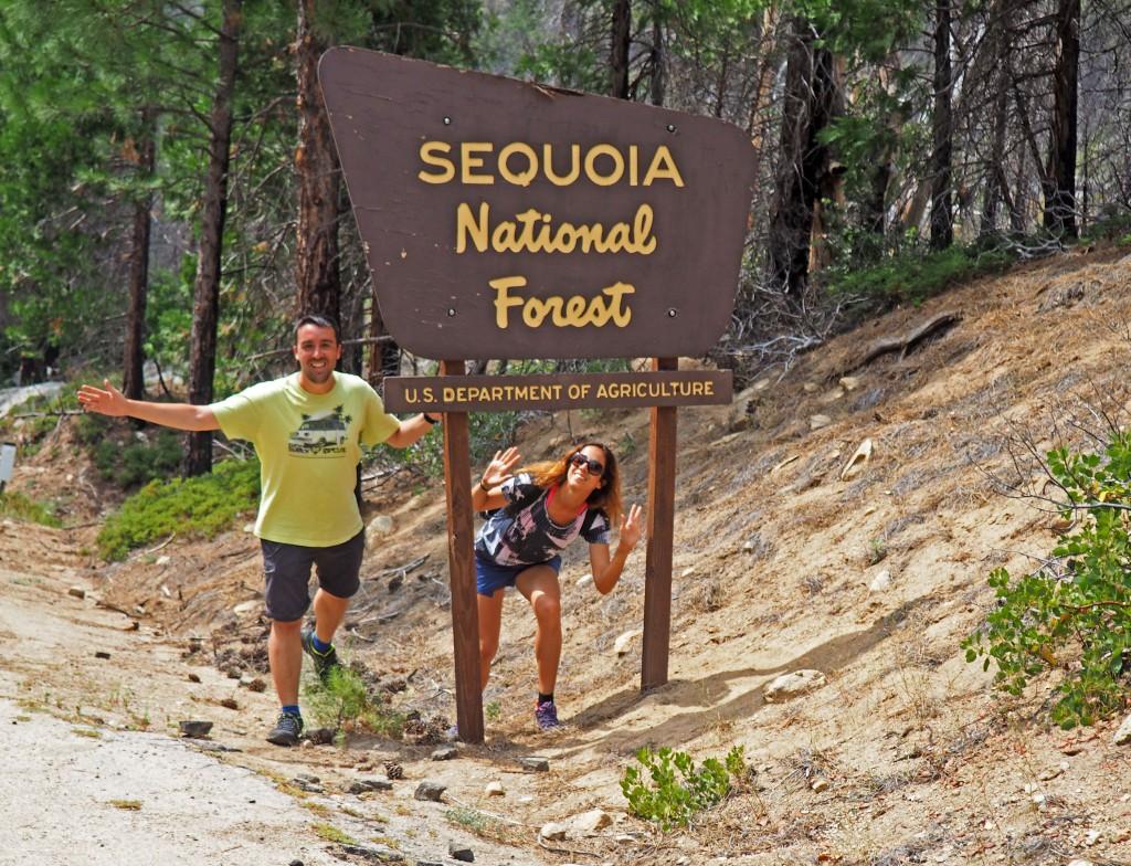 Cartel del Sequoia