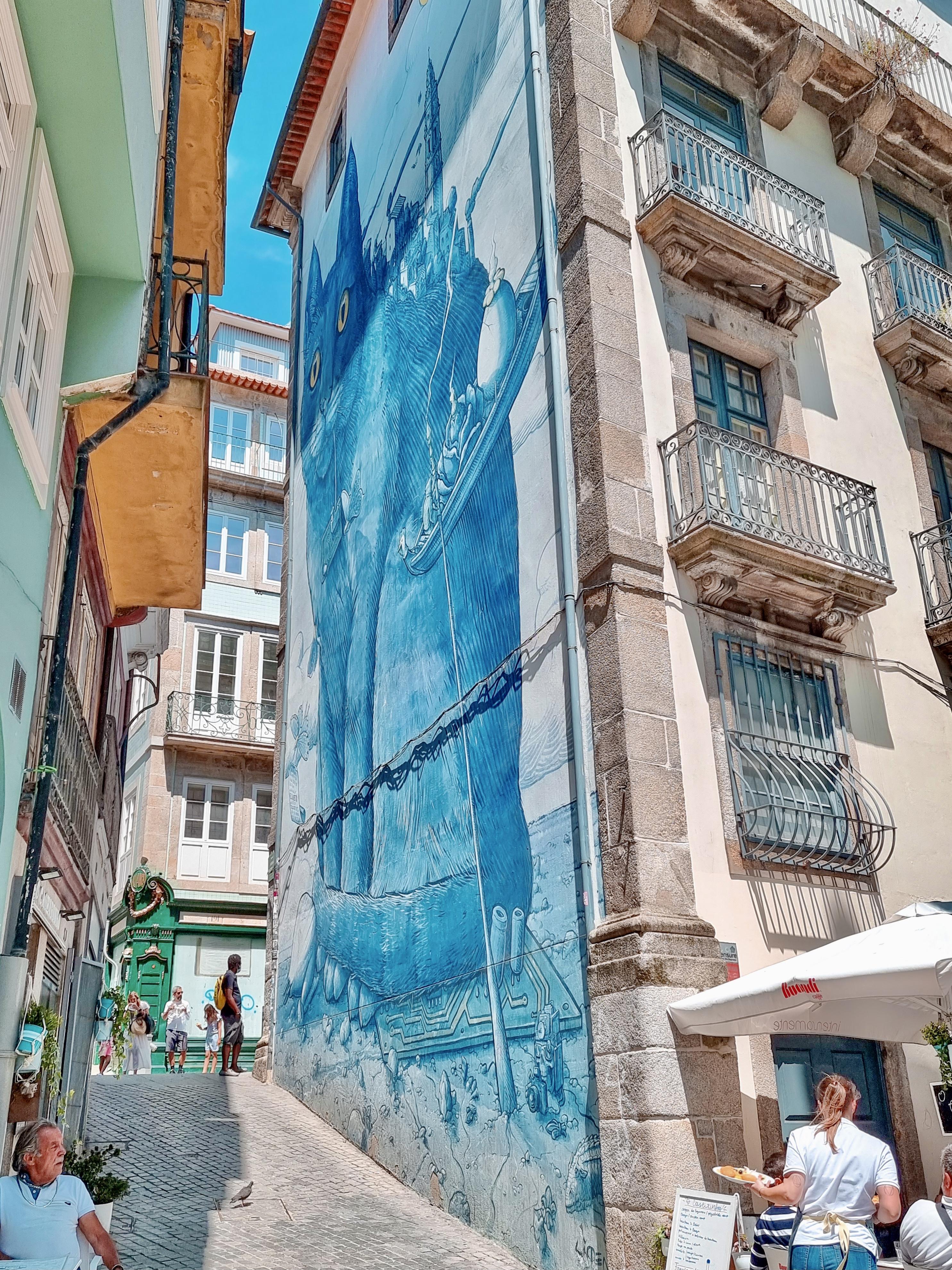 Gato Rua Das Flores